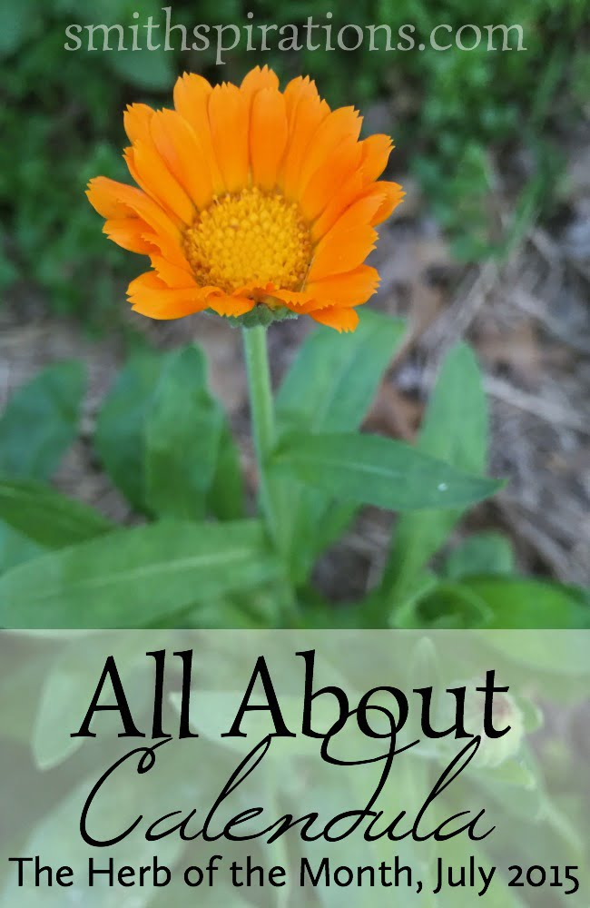 All About Calendula: The Herb of the Month for July 2015. Learn how to put this beneficial herb to use in your home!