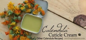 Calendula Cuticle Cream (Plus 5 Other Calendula Recipes To Try)