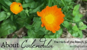 Call About Calendula 2