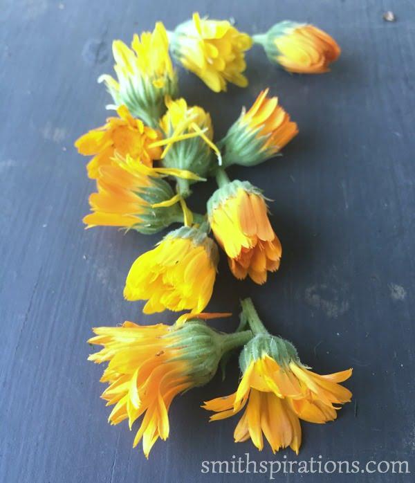 calendula blossoms