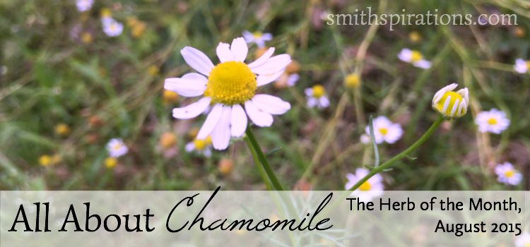 All About Chamomile 2