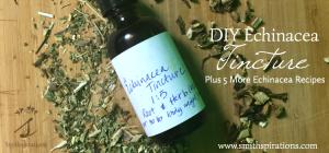 DIY Echinacea Tincture, Plus 5 More Echinacea Recipes