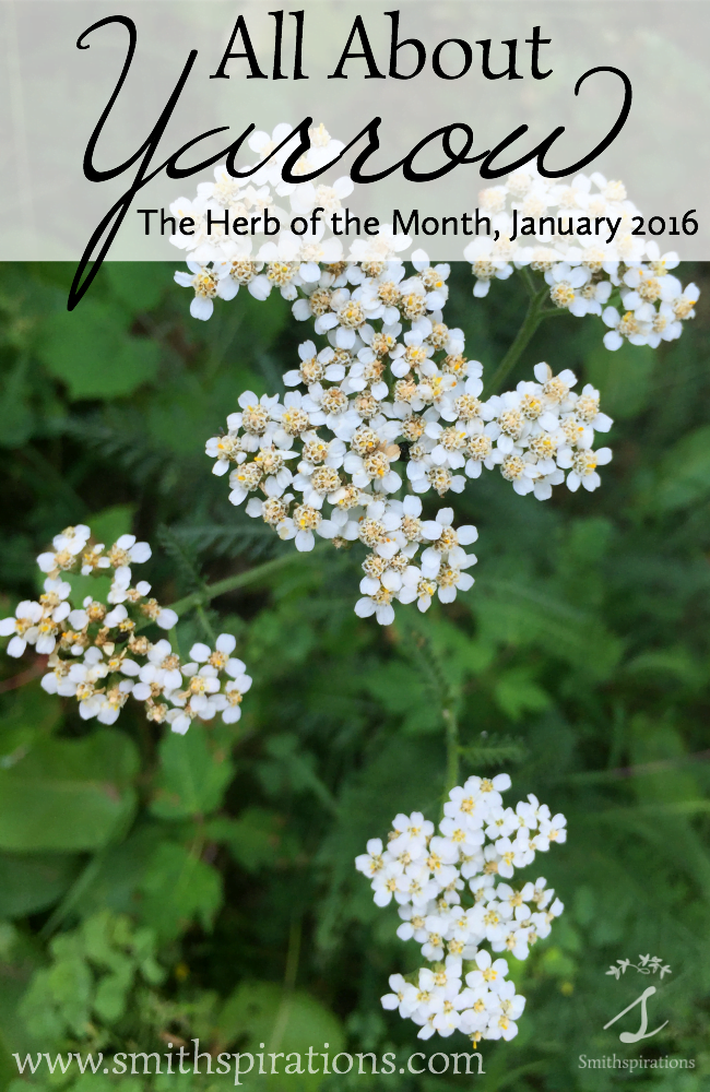 All About Yarrow, The Herb of the Month for January 2016