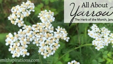 All about yarrow 2