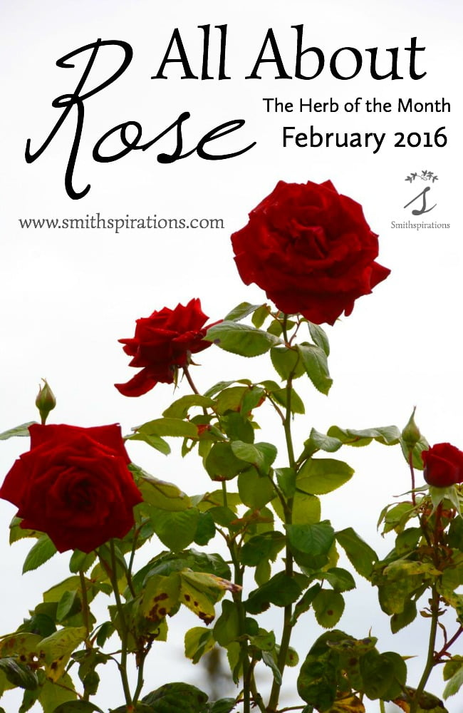 All About Rose, the Herb of the Month for February 2016. There's so much more to roses than pretty bouquets! Learn how to use roses with this post.