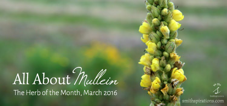 All About Mullein