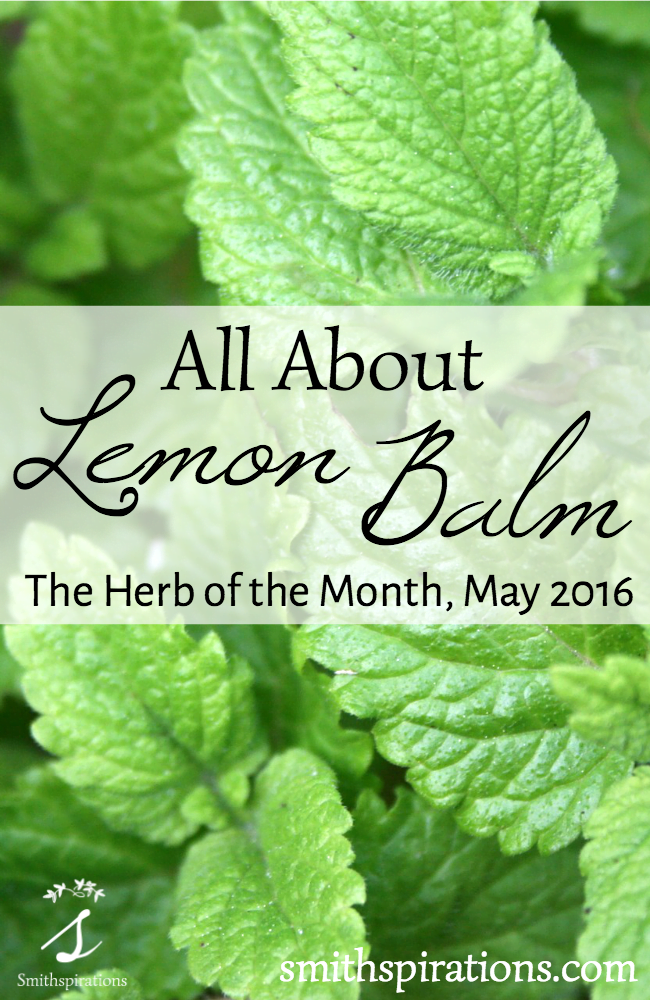 All About Lemon Balm, the Herb of the Month for May 2016