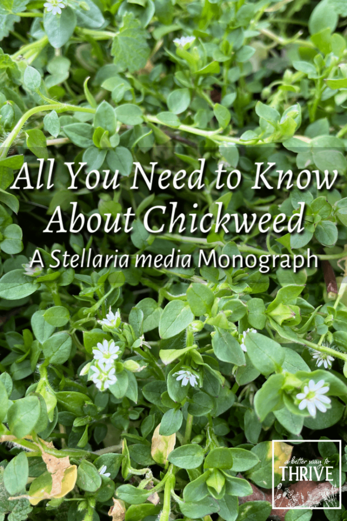 All You Need to Know About Chickweed