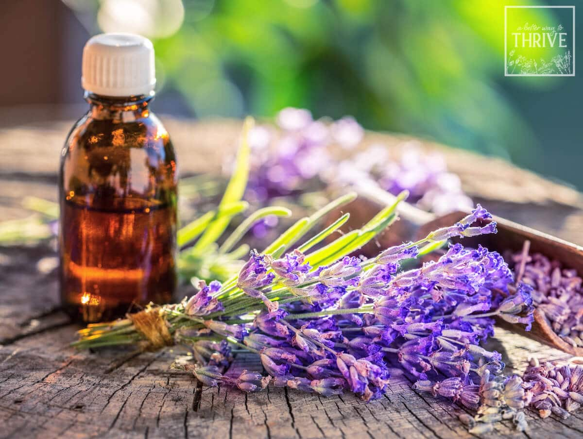 bottle of essential oil with lavender sprig